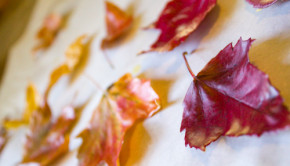 Autumn Crafts: Take the ephemeral beauty of autumn leaves and make it last forever when you preserve leaves with the one simple, natural ingredient that is pure beeswax.
