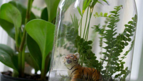 DIY Terrariums: Miniature Rainforest