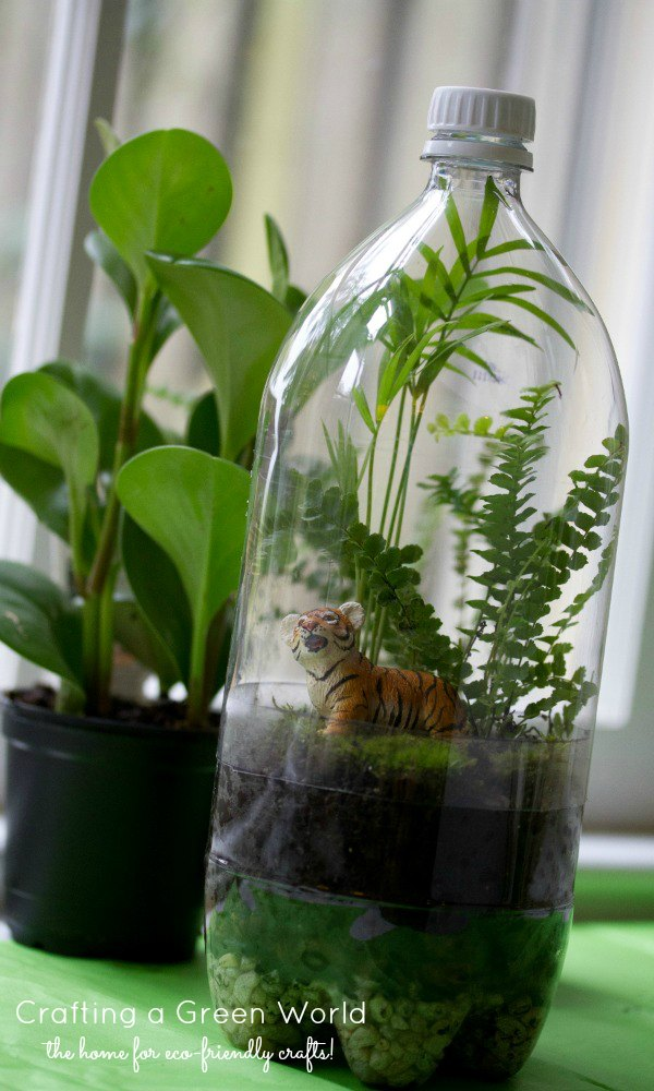 terrarium diy turn an old soda bottle into a miniature rainforest. Black Bedroom Furniture Sets. Home Design Ideas