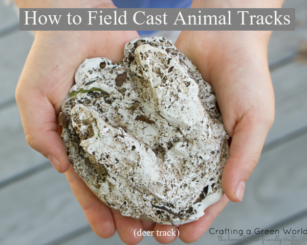 How to Field Cast Animal Tracks