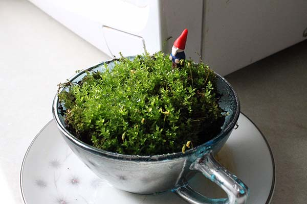 DIY Teacup Terrarium