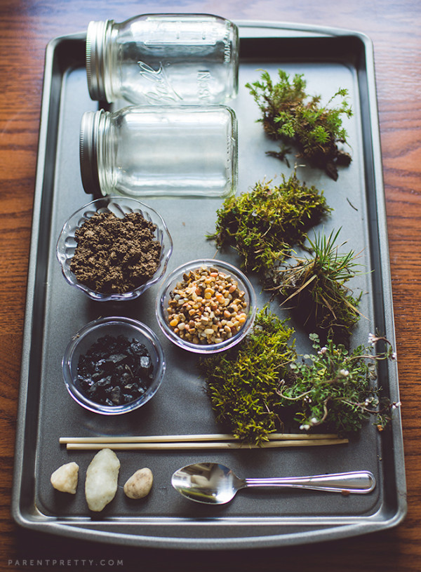 DIY Terrarium for Kids