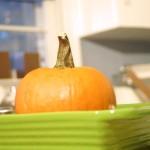 Thanksgiving Nature Crafts: How to Make Homemade Pumpkin Puree