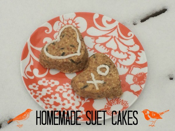 How to Make Homemade Suet Cakes for Birds