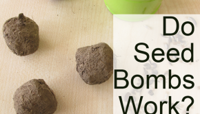 Do Seed Bombs Work?