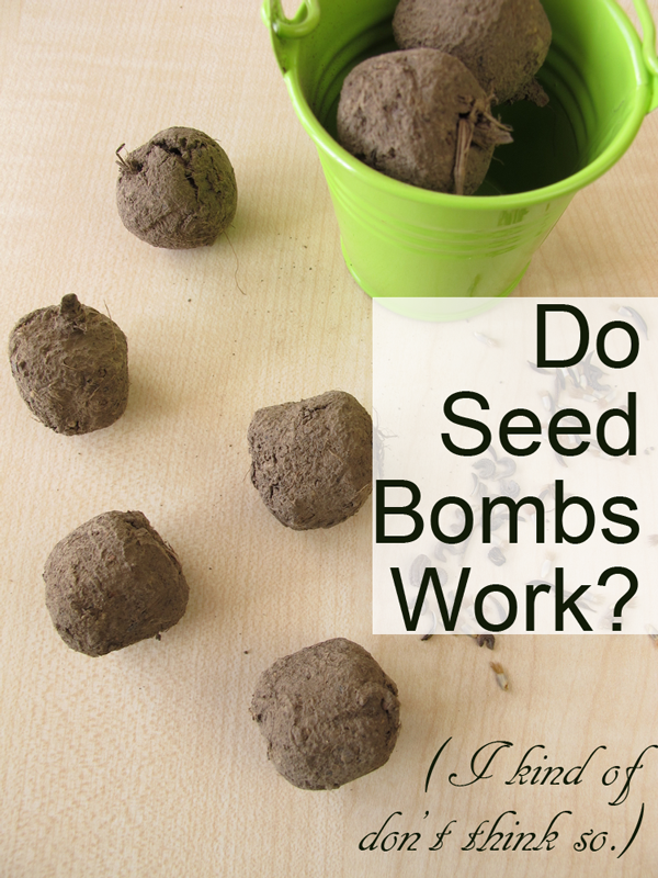 Do Seed Bombs Work I Kind Of Don T Think So Crafting