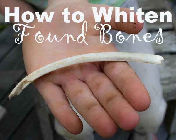 How to Whiten Found Bones
