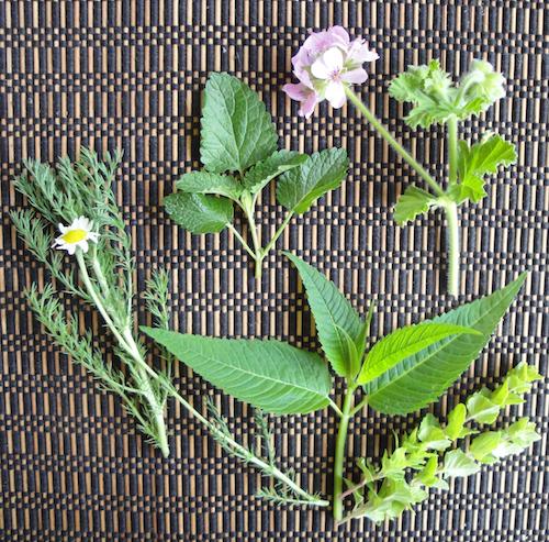Grow your own herbal tea garden!