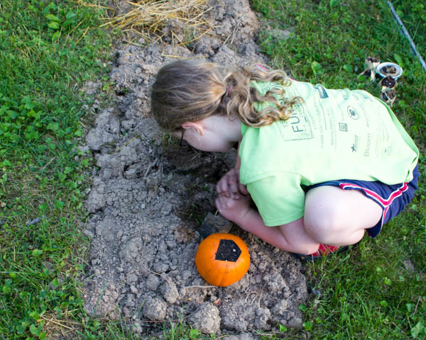 How to Grow a Pumpkin