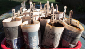 DIY Newspaper Seed Starting Pots