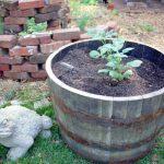 Upcycled Planters - Whiskey Barrel