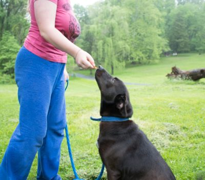 Eco-Friendly Things to DIY For Your Dog